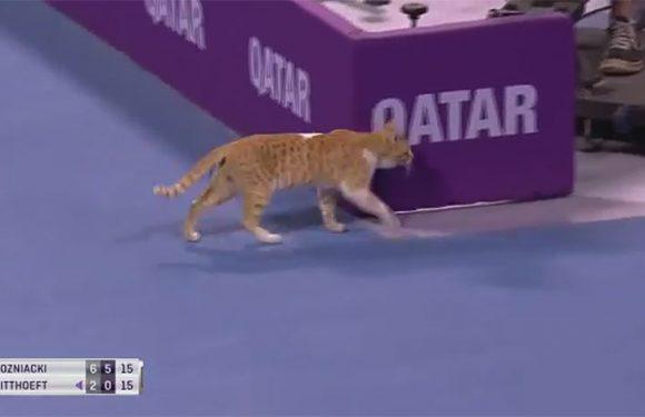 Кот вновь прогулялся по корту в Дохе во время матча (видео)